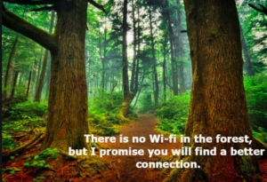 Forest Bathing For The Soul